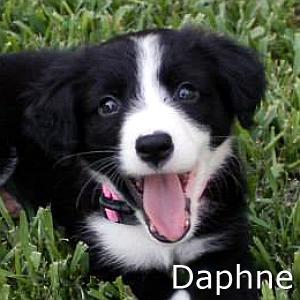 Daphne_TN.jpg