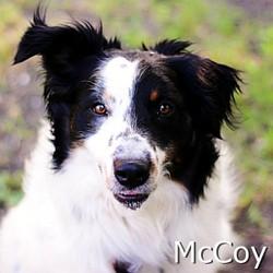 McCoy-TN.jpg