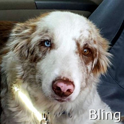 Bling-TN.jpg