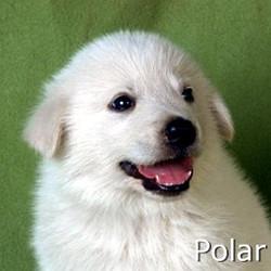 Polar_TN.jpg