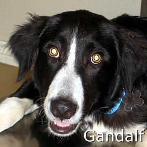Gandalf_TN.jpg
