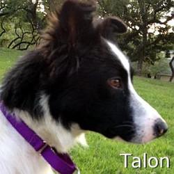 Talon_TN.jpg