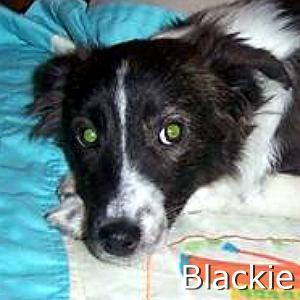 Blackie_TN.jpg