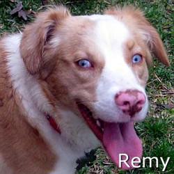 Remy_New_TN.jpg