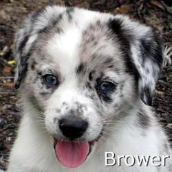 Brower_TN.jpg