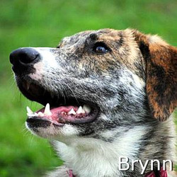 Brynn_TN.jpg