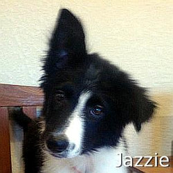 Jazzie_TN.jpg