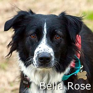 Bella Rose_TN.jpg