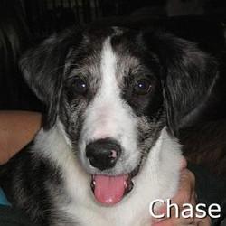 Chase_TN.jpg