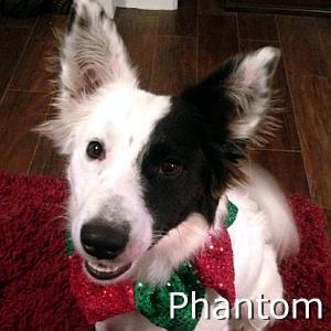 Phantom_TN.jpg