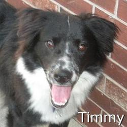 Timmy_TN.jpg