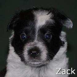 Zack_TN.jpg
