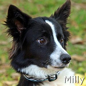 Milly_TN.jpg