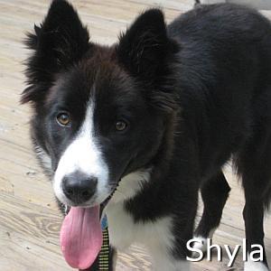 Shyla_TN.jpg