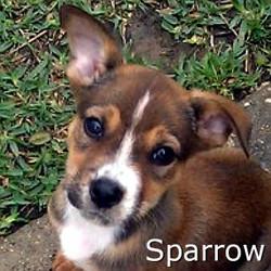 Sparrow_TN.jpg