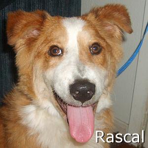 Rascal_TN.jpg