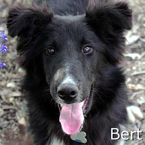 Bert_TN.jpg