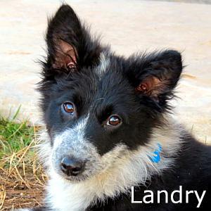 Landry_TN.jpg