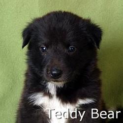 TeddyBear_TN.jpg