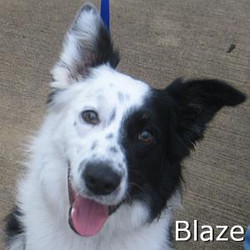 Blaze_TN.jpg