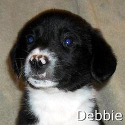 Debbie_TN.jpg