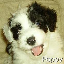 Poppy_TN.jpg
