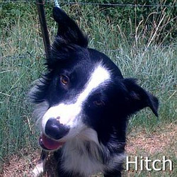 Hitch_TN.jpg