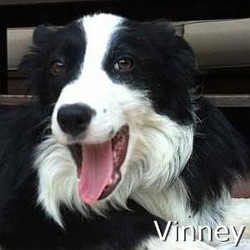 Vinney_TN.jpg