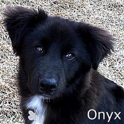 Onyx_TN.jpg