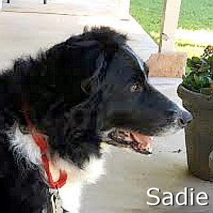 Sadie-TN