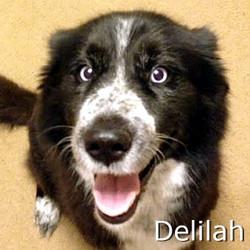 Delilah_TN.jpg