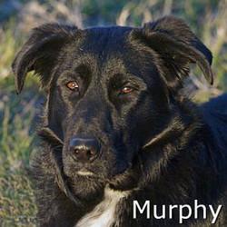 Murphy_TN.jpg
