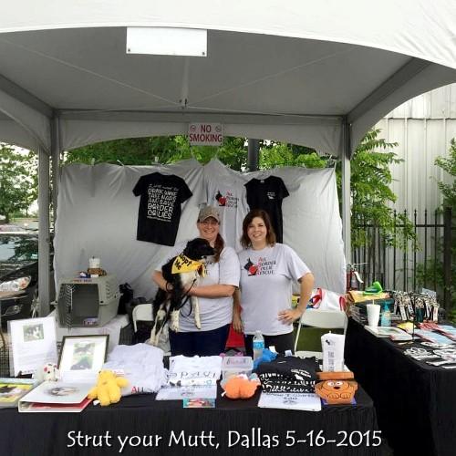 Strut your Mutt-Dallas 5-16-2015 #2.jpg