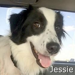 Jessie_TN.jpg