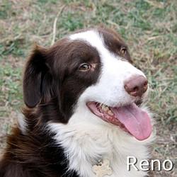 Reno_TN.jpg
