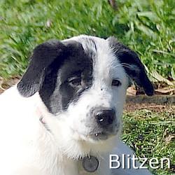 Blitzen_TN2.jpg