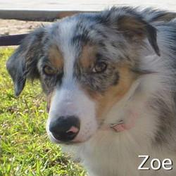 Zoe_TN.jpg