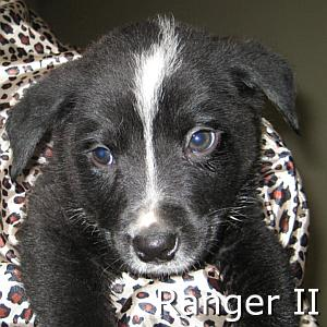 Ranger_II_TN.jpg