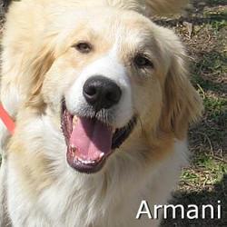 Armani_TN.jpg