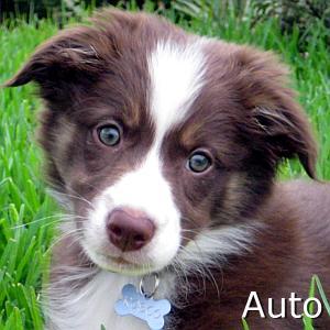 Auto_TN.jpg