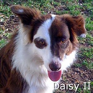 Daisy_II_TN.jpg