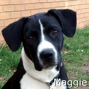 Maggie_TN1.jpg