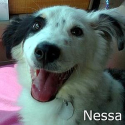 Nessa_TN.jpg
