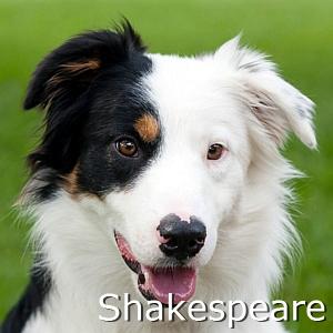 Shakespeare_TN