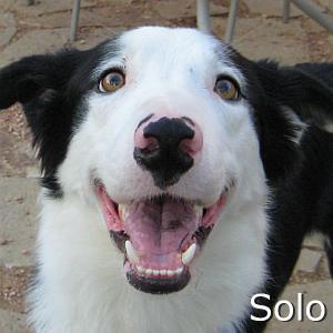 Solo_TN.jpg