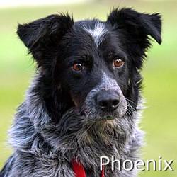 Phoenix_TN_New.jpg
