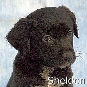 Sheldon_TN.jpg