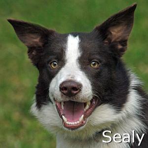 Sealy_TN01.jpg