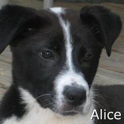 Alice_TN.jpg