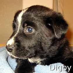 Digby_TN.jpg